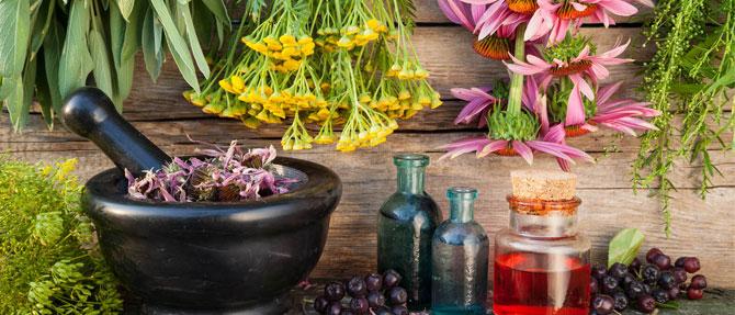 Насколько эффективны растения