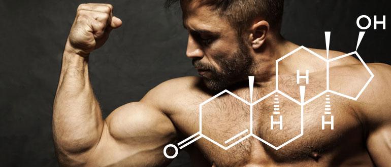 Как работает тестостерон