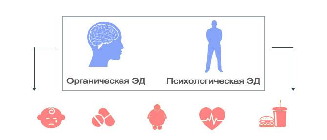 Виды эректильной дисфункции