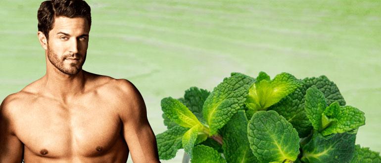 Мята полезные свойства и противопоказания для мужчин